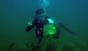 A student in scuba gear conducts research underwater.