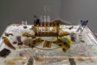 Emerging Practices and BioArt