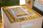 Sheets of winter feed provide a food source if the bees run out of honey.