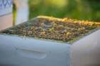 The UB Bees project includes six hives on the North Campus, including this one.