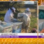 "WGRZ-TV news features ""U-B Bees"" winterizing project."