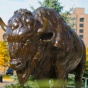 Buffalo statue, North Campus.