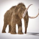 Artist's illustration of a mammoth. This is stock art that may not be republished.