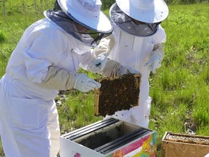 Two people wearing bee suits putting the bees into the newly installed bee boxes on North Campus.