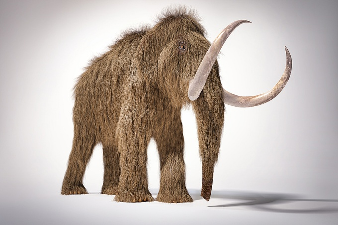 Woolly mammoth realistic 3d illustration; front perspective view.
